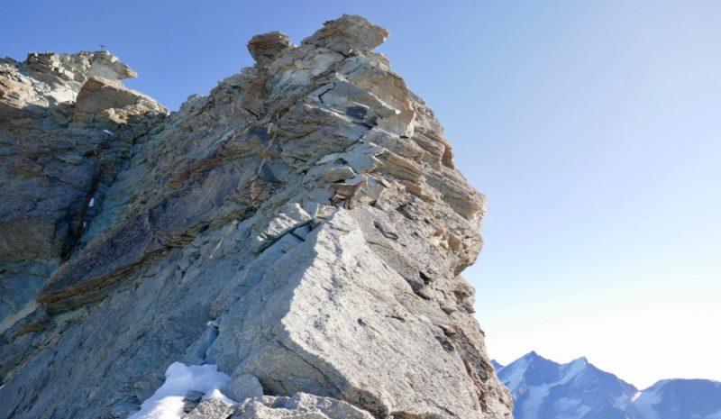 Chamois Climbing
