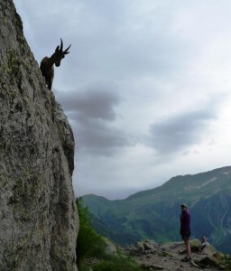 Young Chamois Shows How to Climb